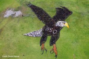 eagle aerial art 350 earth sensibilisation-prevention.fr